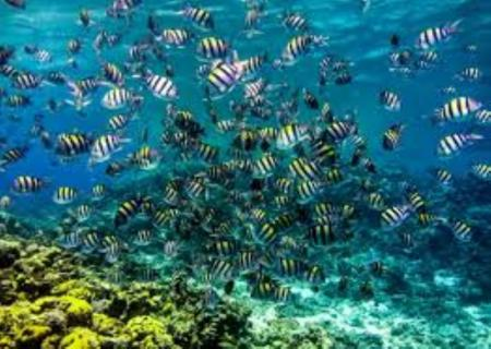 Day Tour From Hurghada